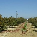 Rancho Rodoro Avacado Groves